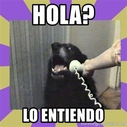 Yes, this is dog! - Hola? lo entiendo