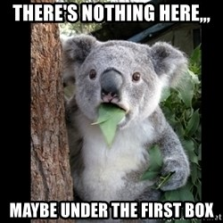 Koala can't believe it - There's nothing here,,, Maybe under the first box