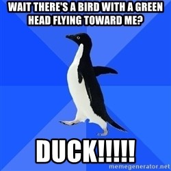 Socially Awkward Penguin - wait there's a bird with a green head flying toward me? Duck!!!!!