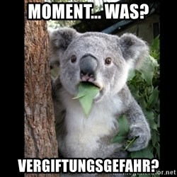 Koala can't believe it - MOMENT... WAS? VERGIFTUNGSGEFAHR?