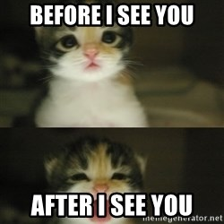 Adorable Kitten - before i see you after i see you