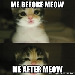 Adorable Kitten - me before meow me after meow