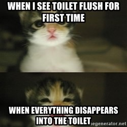Adorable Kitten - when i see toilet flush for first time when everything disappears into the toilet