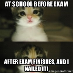 Adorable Kitten - at school before exam after exam finishes, and i nailed it!