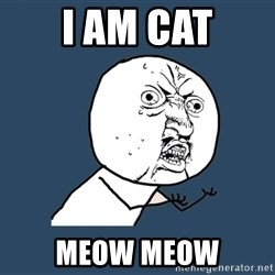 Y U No - i am cat meow meow
