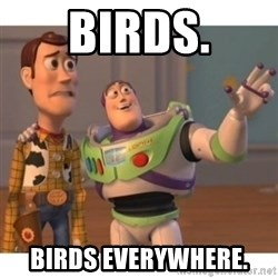 Toy story - Birds. Birds Everywhere.