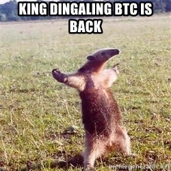 Anteater - King Dingaling BTC is back