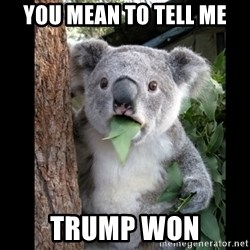 Koala can't believe it - you mean to tell me trump won
