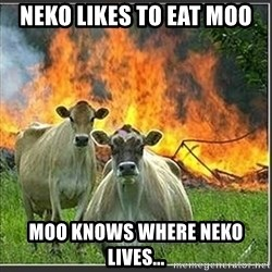 Evil Cows - Neko likes to eat Moo Moo knows where Neko lives...