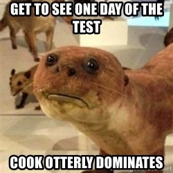 Sad Otter - Get to see one day of the Test Cook otterly dominates
