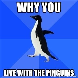 Socially Awkward Penguin - why you  live with the pinguins