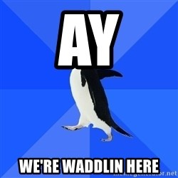 Socially Awkward Penguin - AY WE'RE WADDLIN HERE