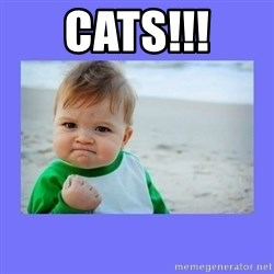 Baby fist - CATS!!!