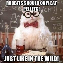 Chemistry Cat - Rabbits should only eat pellets! Just like in the wild!