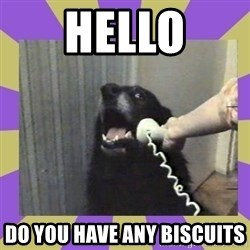 Yes, this is dog! - Hello Do you have any biscuits