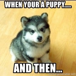 Baby Courage Wolf - when your a puppy..... and then...