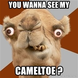 Crazy Camel lol - You wanna see my  CAMELTOE ?