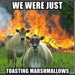 Evil Cows - we were just  toasting marshmallows
