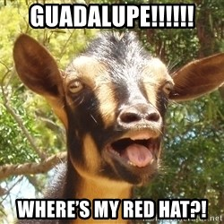 Illogical Goat - Guadalupe!!!!!! Where's my red hat?!