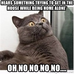 Conspiracy cat - hears something trying to get in the house while being home alone*  Oh no no no no....