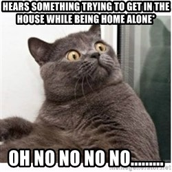 Conspiracy cat - hears something trying to get in the house while being home alone*  Oh no no no no.........