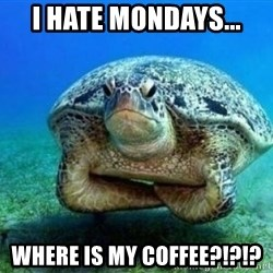 disappointed turtle - I hate mondays... WHERE IS MY COFFEE?!?!?