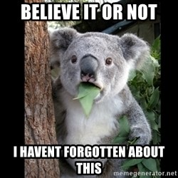 Koala can't believe it - Believe it or not I havent forgotten about this