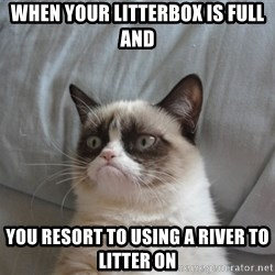 Grumpy cat good - When your litterbox is full and you resort to using a river to litter on