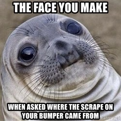 Awkward Seal - the face you make when asked where the scrape on your bumper came from