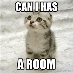 Can haz cat - can i has a room