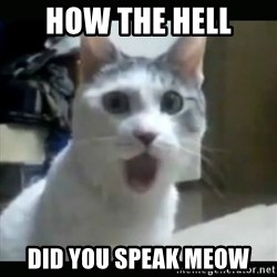 Surprised Cat - HOW THE HELL DID YOU SPEAK MEOW