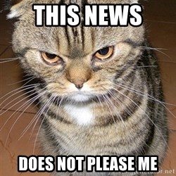 angry cat 2 - this news  does not please me
