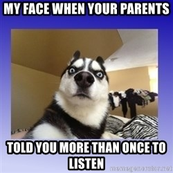 Dog Surprise - my face when your parents told you more than once to listen
