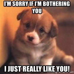 cute puppy - I'm sorry if I'm bothering you I just really like you!