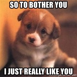cute puppy - So to bother you I just really like you
