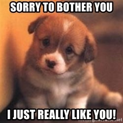 cute puppy - Sorry to bother you I just really like you!
