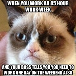 Angry Cat Meme - when you work an 85 hour work week And your boss tells you you need to work one day on the weekend also