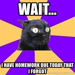 Anxiety Cat - wait... I have homework due today that i forgot