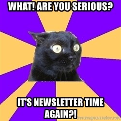 Anxiety Cat - What! are you serious? It's newsletter time again?!
