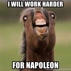 Horse - i will work harder For NAPOLEON