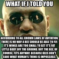 What If I Told You - What if I told you According to all known laws of avitation, there is no way a bee should be able to fly. It's wings are too small to get it's fat little body off the ground. But the bee, of course, flys anyway. Because bees don't care what human's think is impossible.