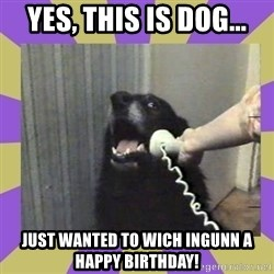 Yes, this is dog! - Yes, this is dog... Just wanted to wich Ingunn a happy birthday!