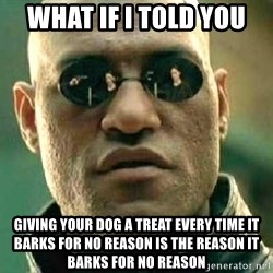 What if I told you / Matrix Morpheus - What if I told you  Giving your dog a treat every time it barks for no reason is the reason it barks for no reason