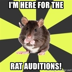 Survivor Rat - I'm here for the  Rat Auditions!
