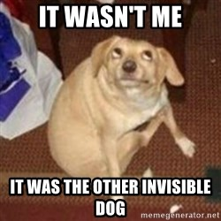 Oh You Dog - It wasn't me It was the other invisible dog