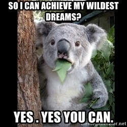 Koala can't believe it - SO I CAN ACHIEVE MY WILDEST DREAMS? YES . YES YOU CAN.