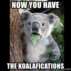 Koala can't believe it - Now you have the koalafications