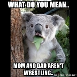 Koala can't believe it - What do you mean.. mom and dad aren't wrestling..