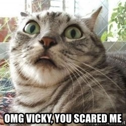 scared cat - OMG vicky, you scared me