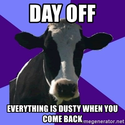 Coworker Cow - Day off Everything is dusty when you come back